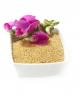 Amarantus ekspandowany popping właściwosci cena500g
